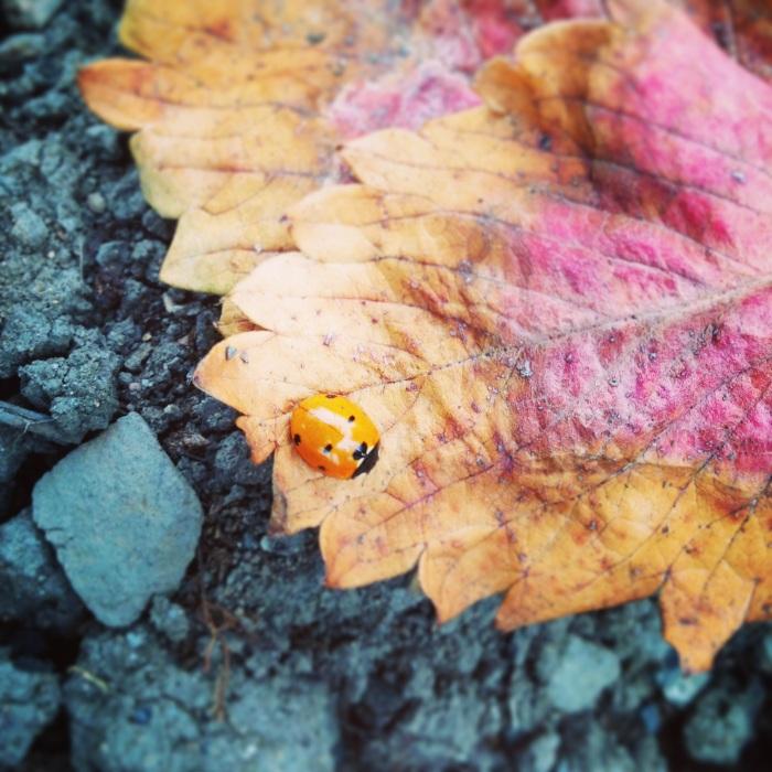 Ladybird Colours