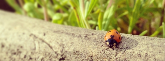 Mrs.Ladybird