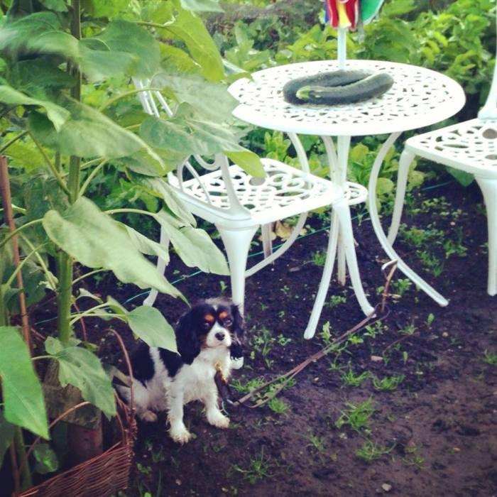 Jassy's favourite spot under the sunflowers