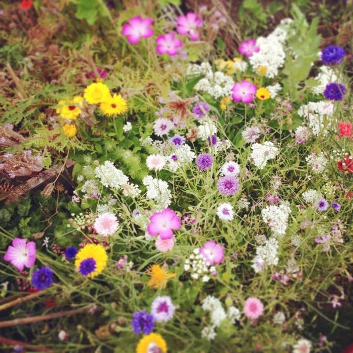Wild Flower Patch