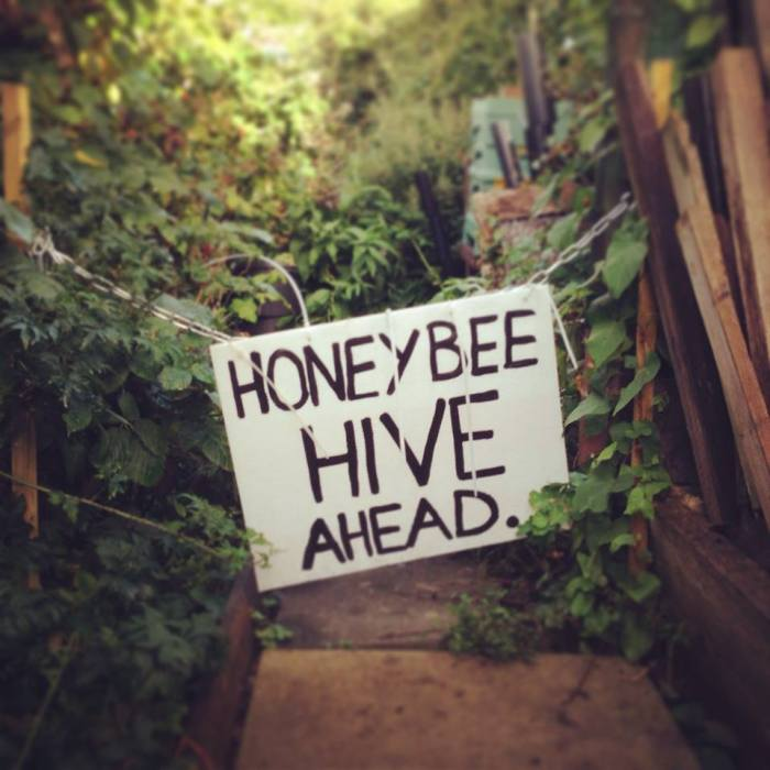 Beehive ahead