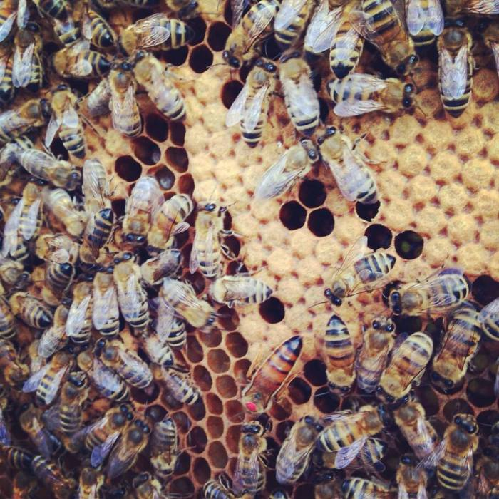 Bees in the making