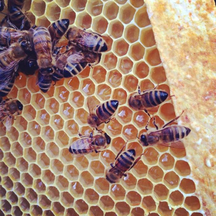 Gorging on honey
