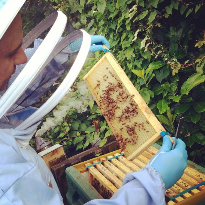 Insecting the bees