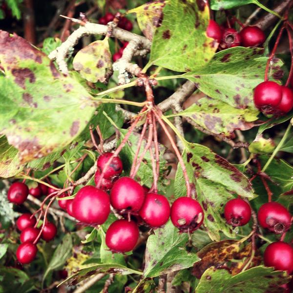 Bursting Berries
