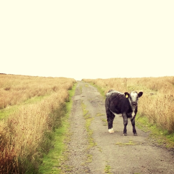 Google Maps took us through a farmers field... we knew we were in the middle of no where when we had to move a cow out of the road hehe :D