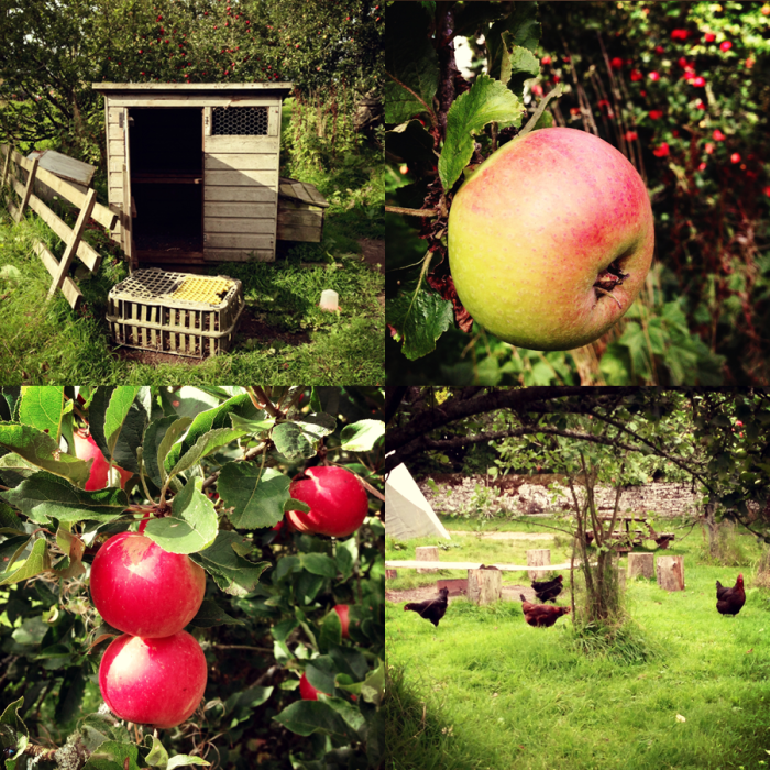 When we unpacked we off to explore the grounds :) We met the cluckies and saw trees bursting with big juicy apples, yum yum :)