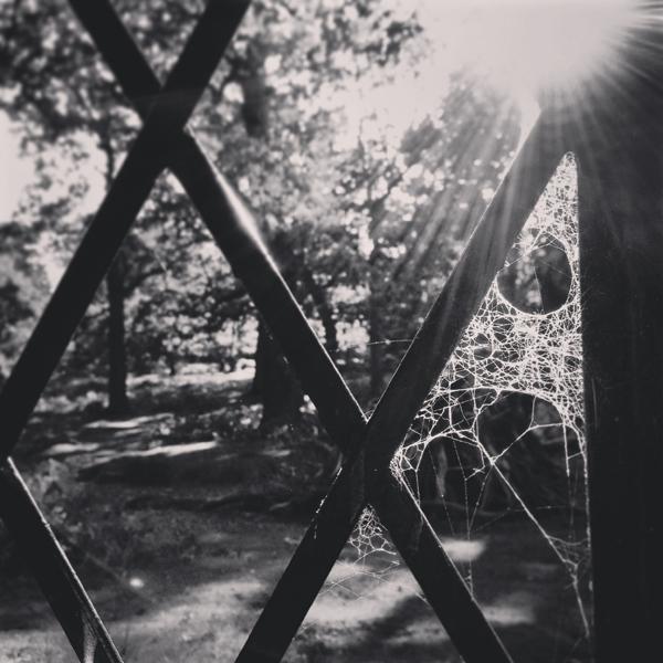 Spooky Cobwebs