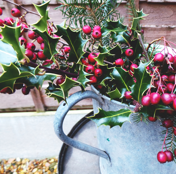Berries Fir and holly