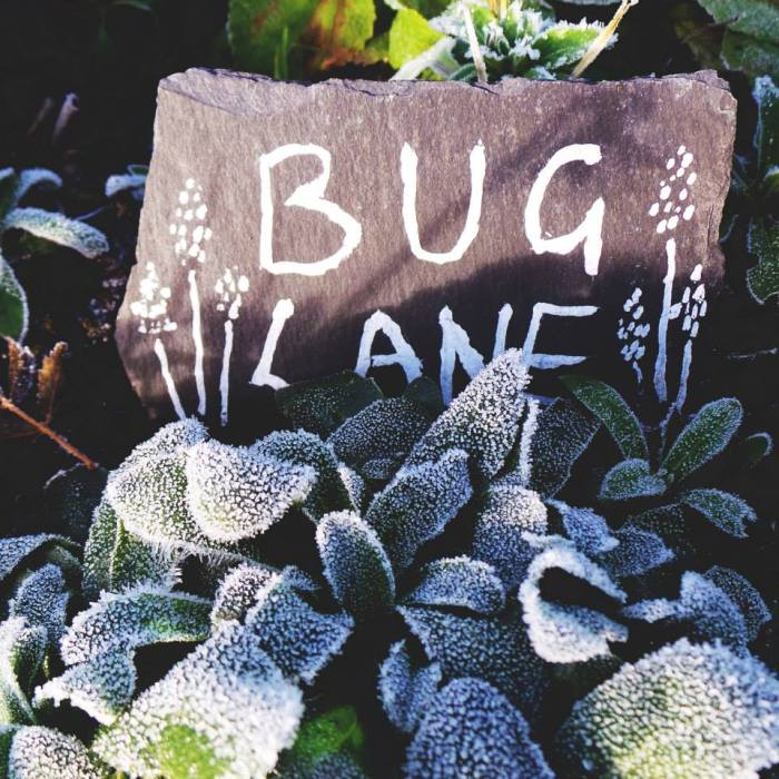 Bug Lane in the frost