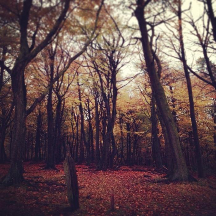Picture Of The Week ~ Warm Woodland Colour
