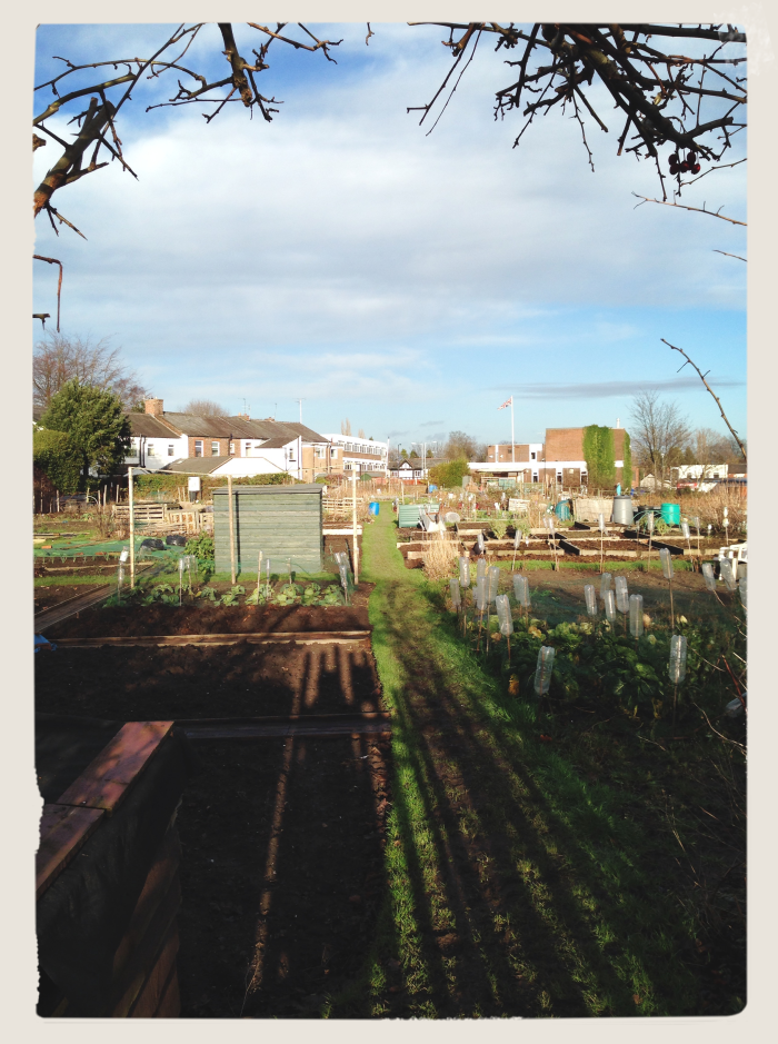 Peeping at the Allotment