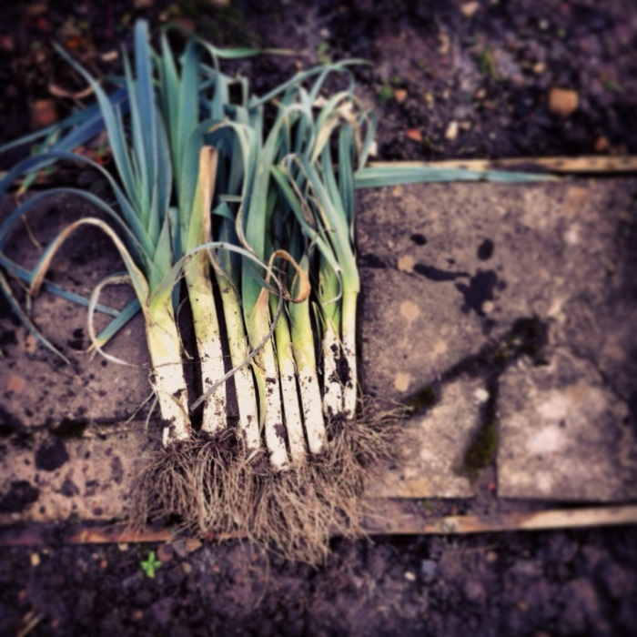 Picture Of The Week ~ Lucious Leeks