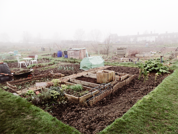 Picture Of The Week - Allotment in a different light