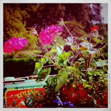 Flowers on a boat copy