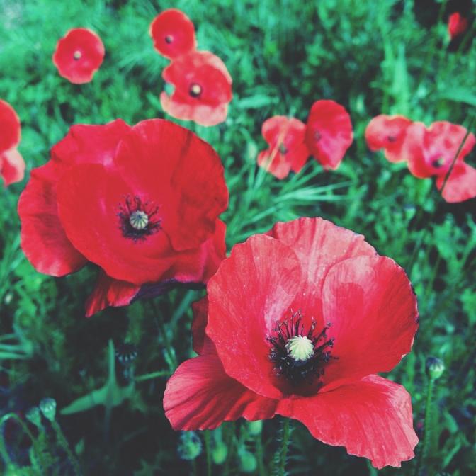 Commemorating World War I copyright Kaz Brown copy