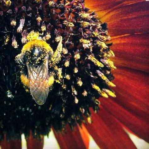 Picture of the week ~ Covered in Pollen