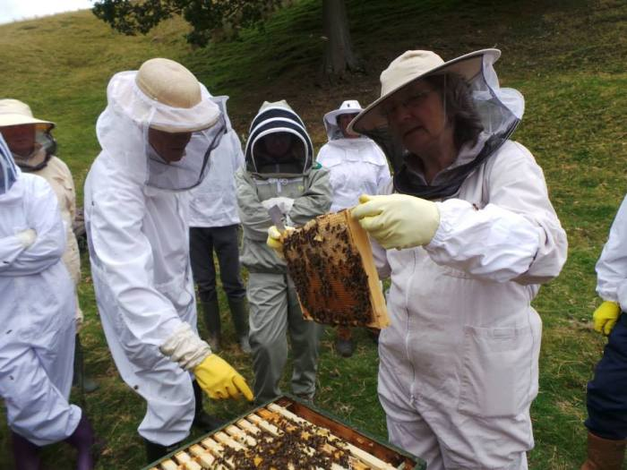 Bee hive inspection