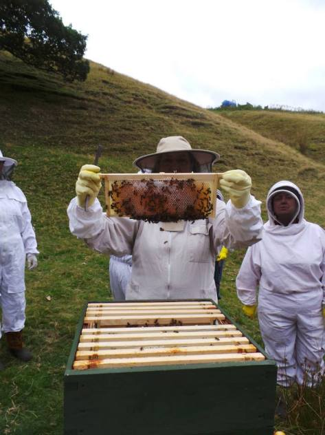 Bee inspecting