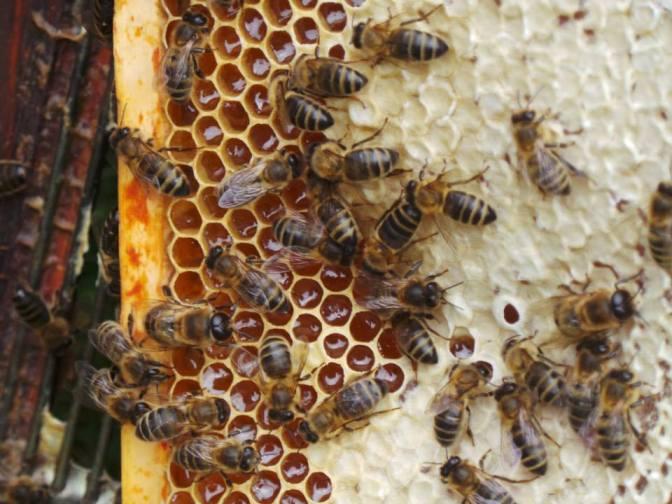 A Bee In My Bonnet