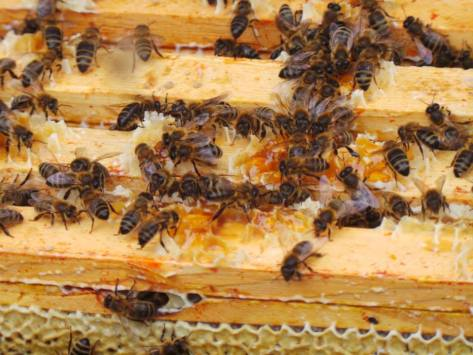 Feasting bees