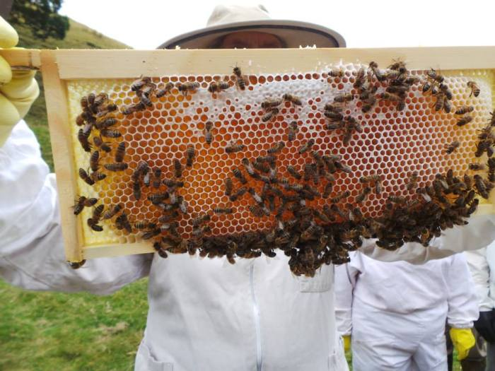 Holding the bees