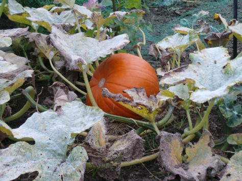 Juicy Pumpkins