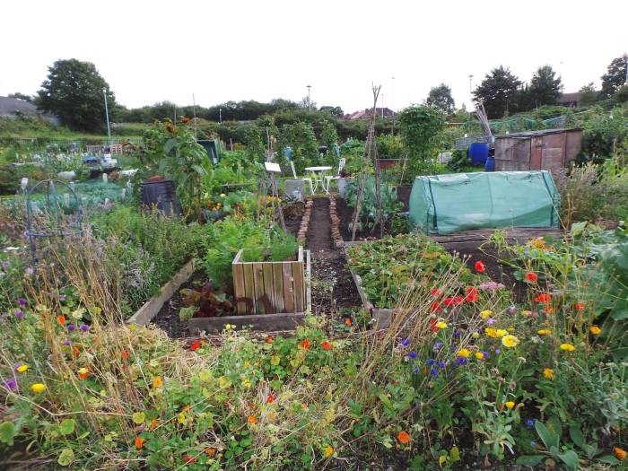 Our Plot nice and tidy