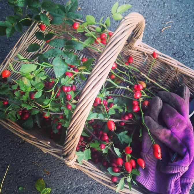 Picture Of The Week ~ Collecting Autumn1