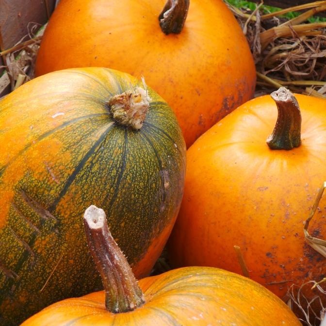 4 perfect pumpkins