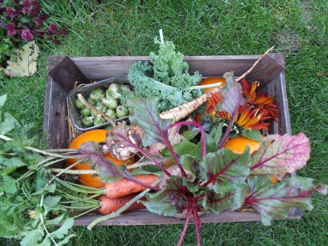 Bountiful Harvest feature image