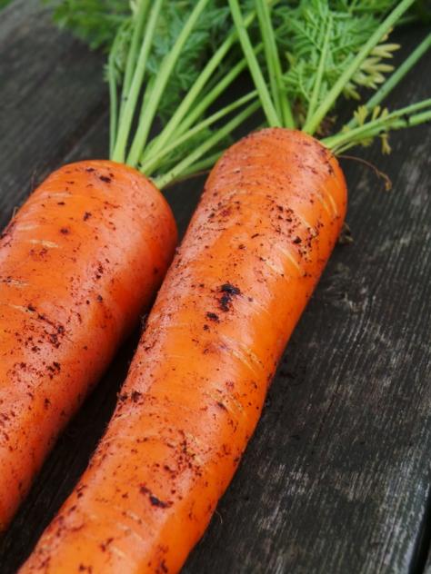 Earthy sweet carrots