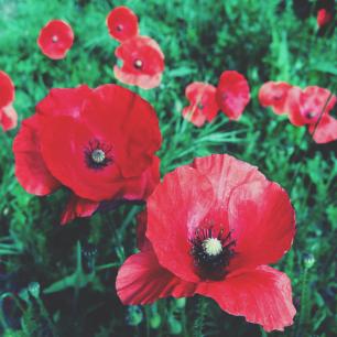 Commemorating World War I copyright Kaz Brown