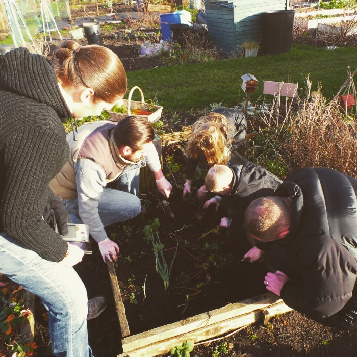 The gang digging up parsnips