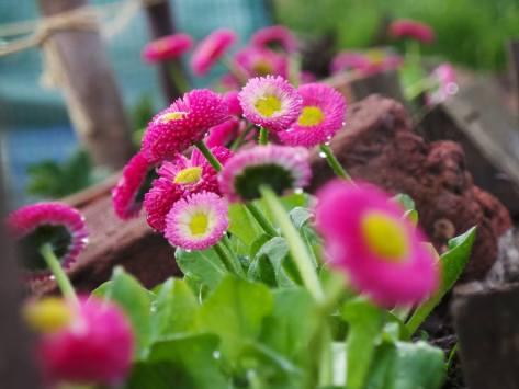 Edible Garden Show Winning imae