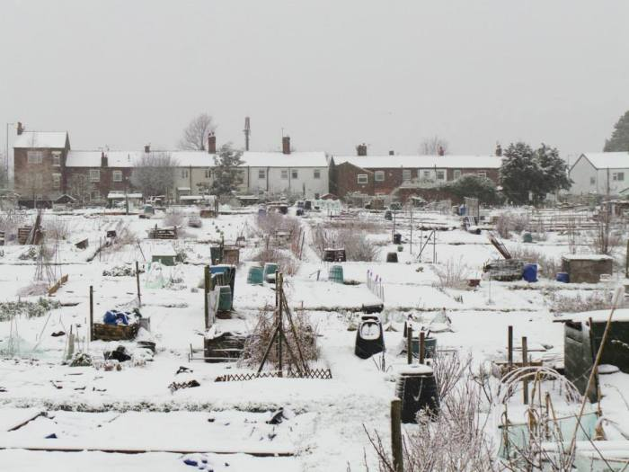 Hazel Grove Allotment winter