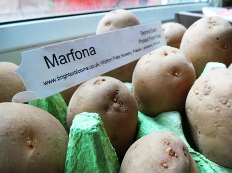 Potato Day 13