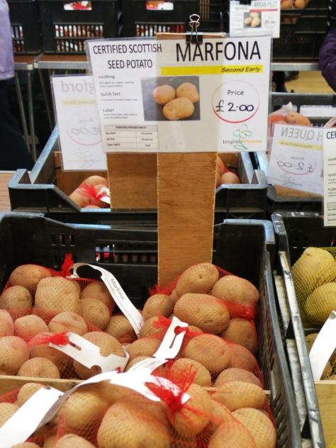 Potato Day 7