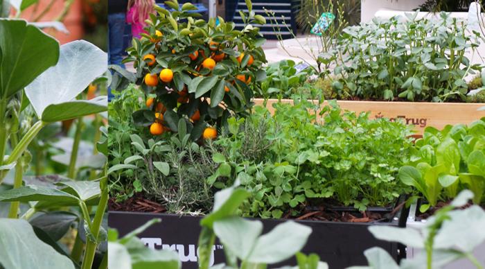 The Edible Garden Show Veg Trug Veg and flowers at entrance