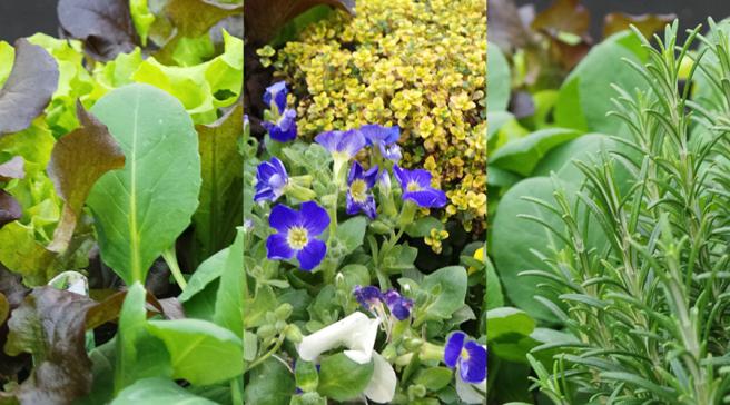 The Edible Garden Show Veg Trug veg and herbs