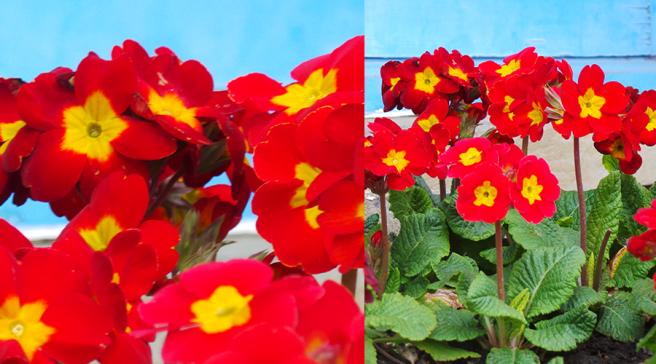 The Edible Garden Show Welcoming Flowers Alexandra Palace