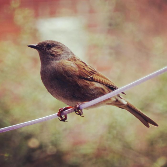Feathered Friend 4