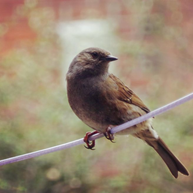 Feathered Friend 5