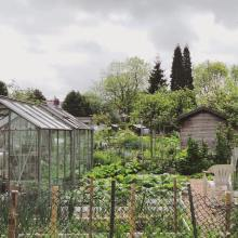 Barnfield Allotment Plant Sale2