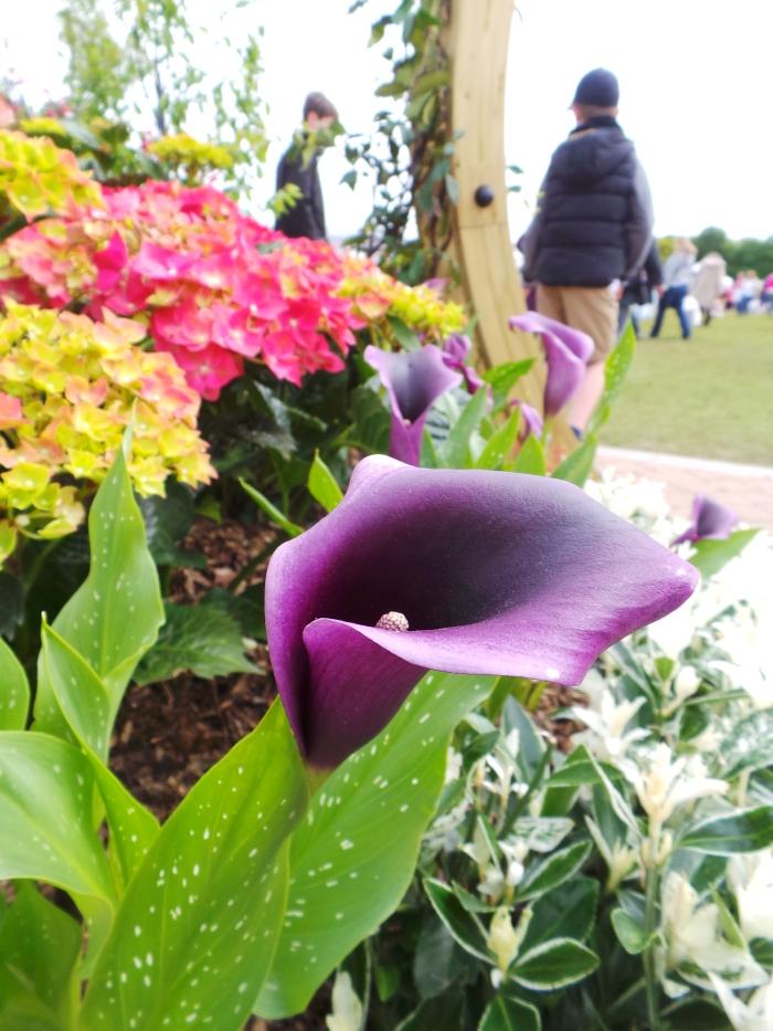 Holker Garden Festival | Colours