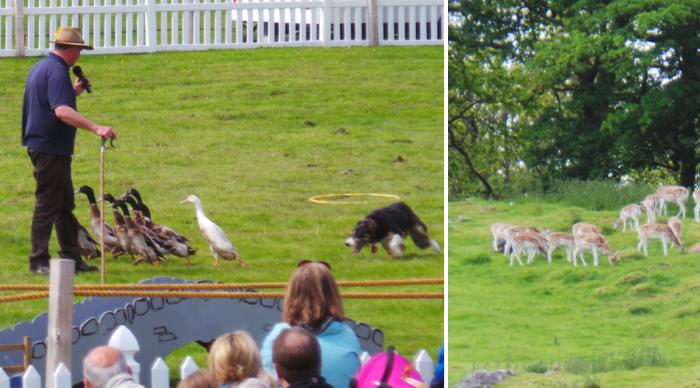 Holker Garden Festival |Deers & Ducks