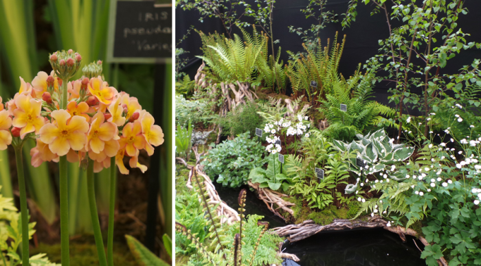 Holker Garden Festival |Displays in the floral marque