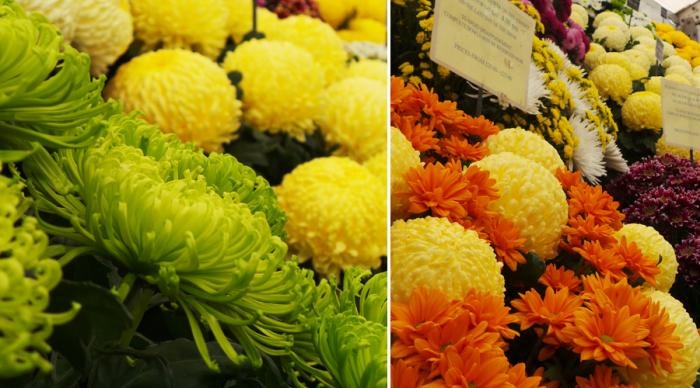 Holker Garden Festival |Floral Displays