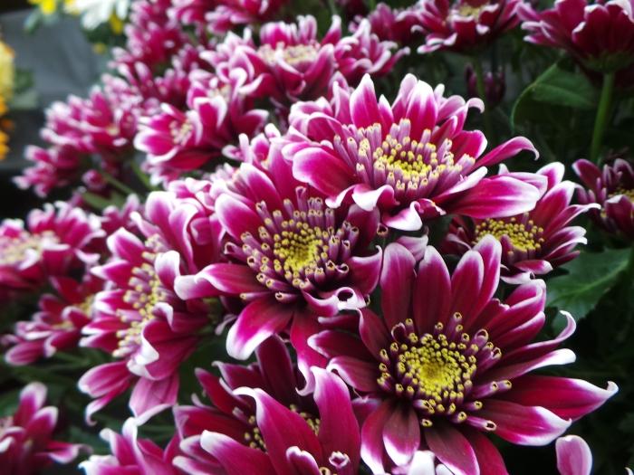 Holker Garden Festival | Flowers