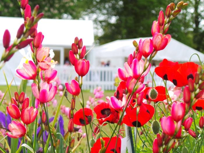 Holker Garden Festival | Ladybird poppies